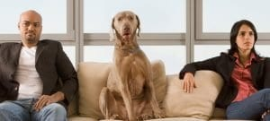 Pets In Divorce An Overview For Colorado Pet Owners